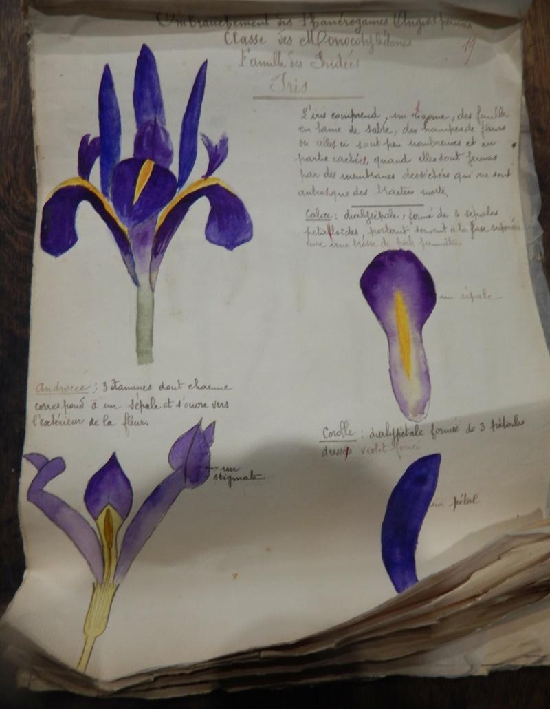 Herbier années 1930 Dscn1421
