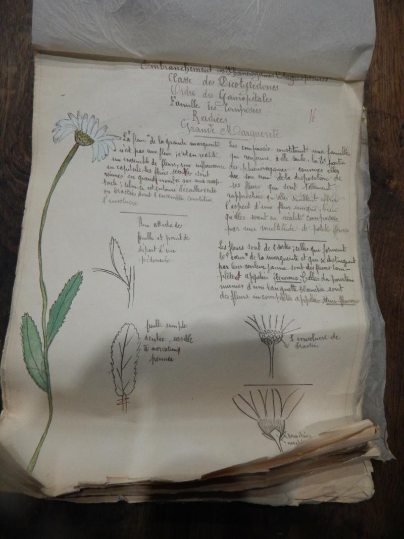 Herbier années 1930 Dscn1422