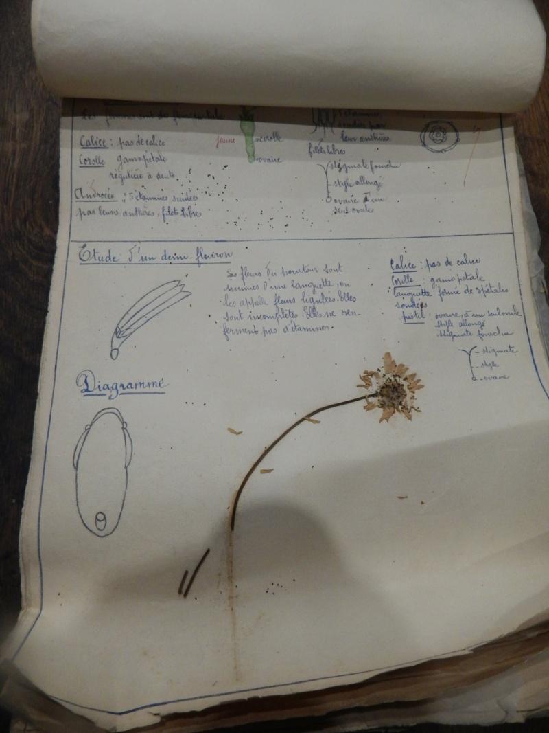Herbier années 1930 Dscn1423