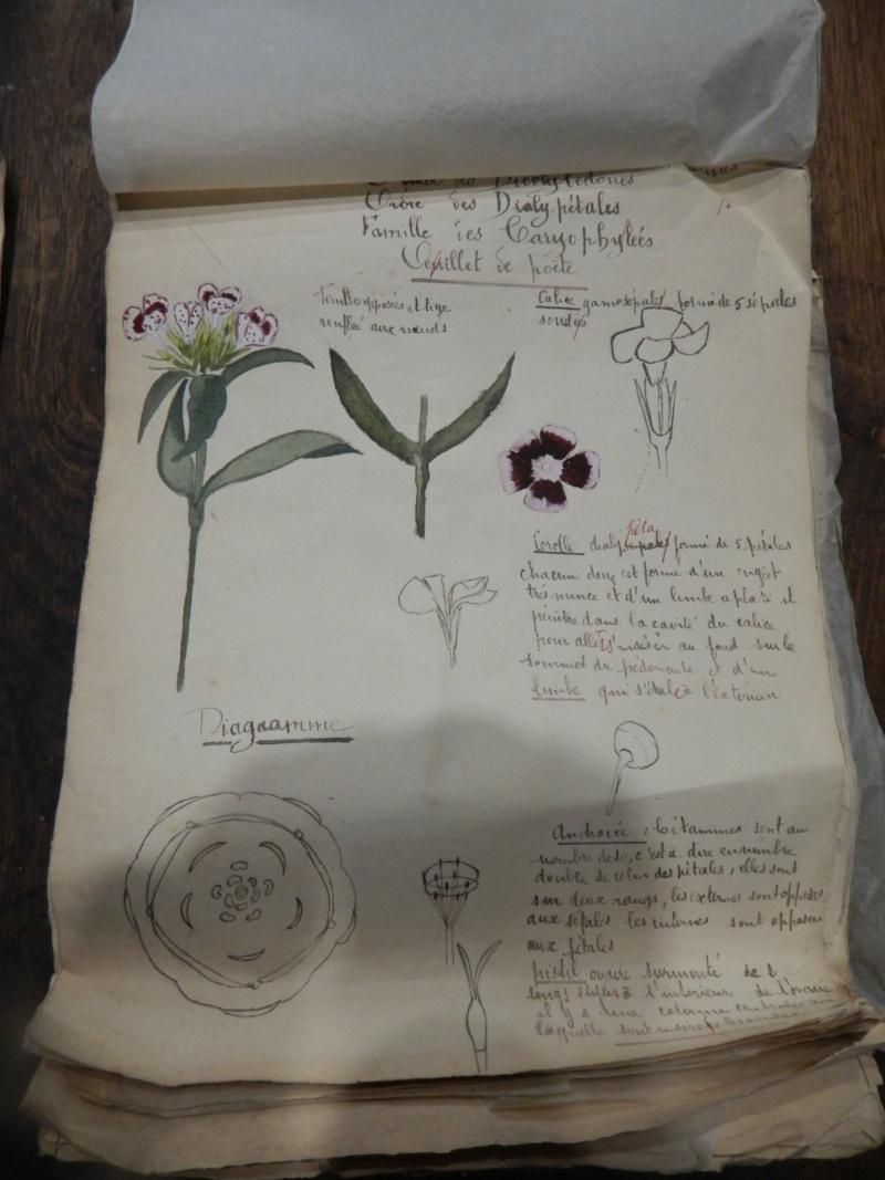 Herbier années 1930 Dscn1424