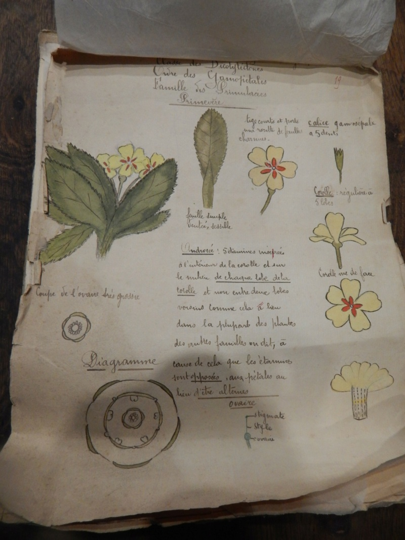 Herbier années 1930 Dscn1428