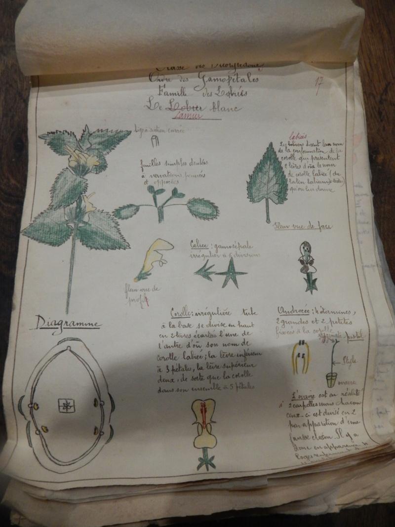 Herbier années 1930 Dscn1429