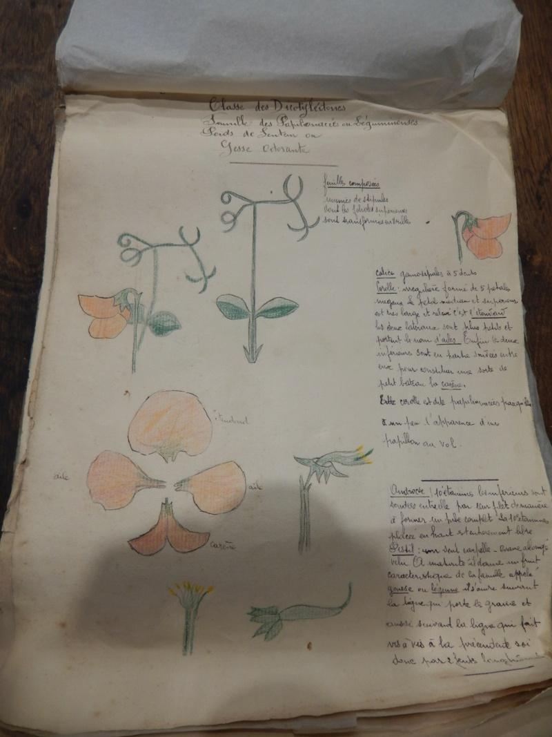 Herbier années 1930 Dscn1431