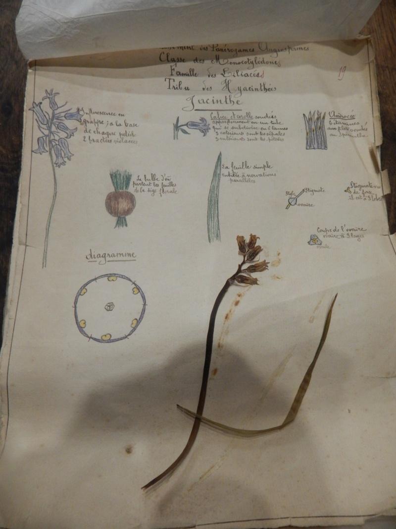 Herbier années 1930 Dscn1432