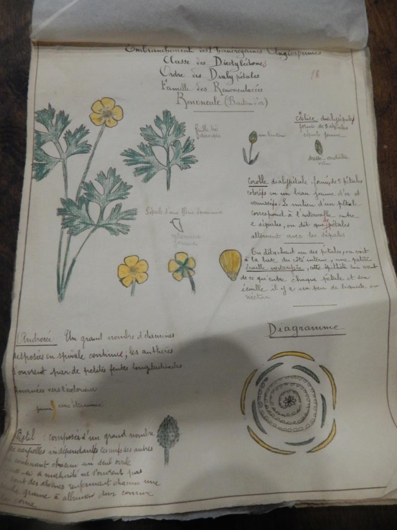 Herbier années 1930 Dscn1433
