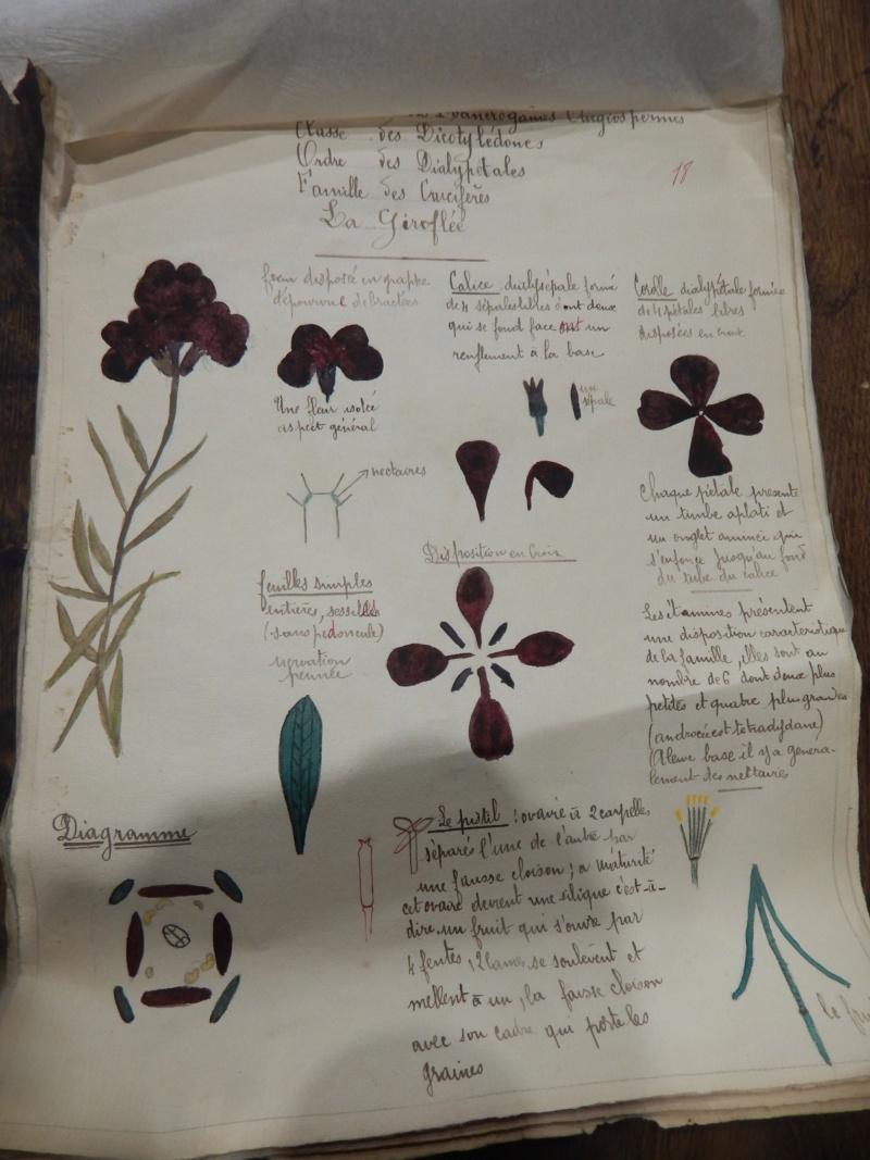 Herbier années 1930 Dscn1434