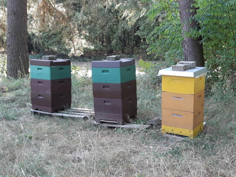 [Fabrication en série] Des ruches en pagaille - Page 3 20180880