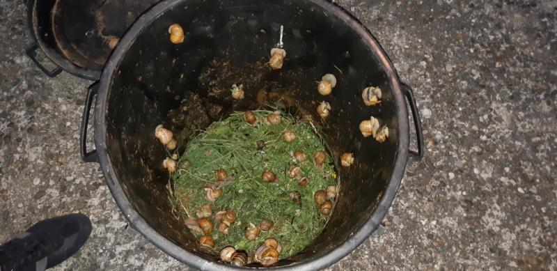FABRICATION d'un hôtel à escargots pour les schtroumfs 20201038