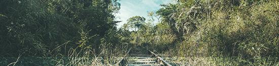 Gesetz des Dschungels Railro10