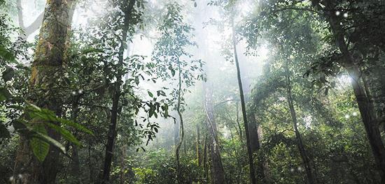Gesetz des Dschungels Unbena14
