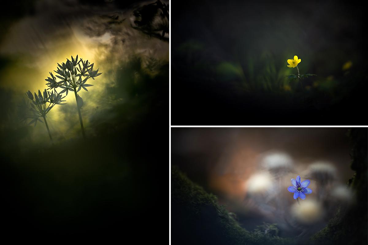 Petit mélange de photos... Ophrys10