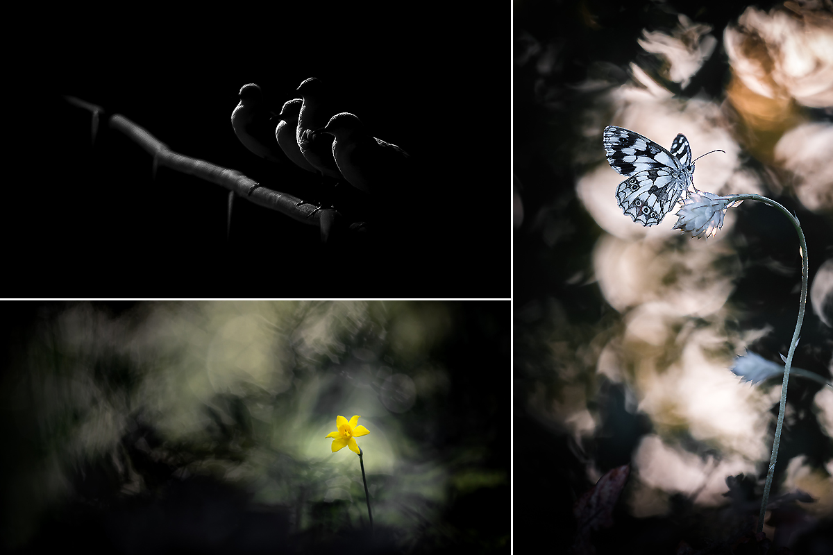Petit mélange de photos... Ophrys11