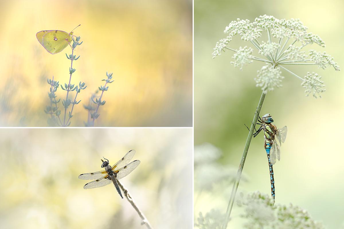 Petit mélange de photos... Ophrys12