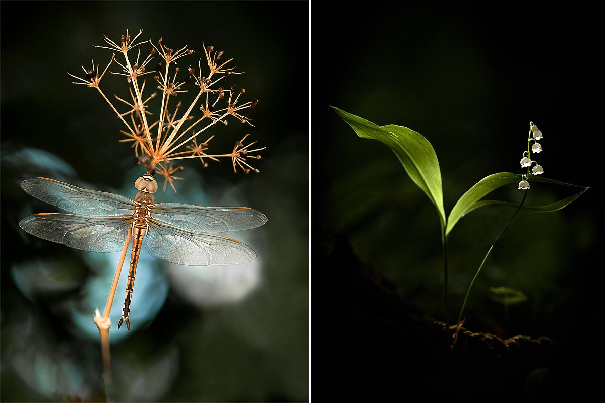 Petit mélange de photos... Ophrys14