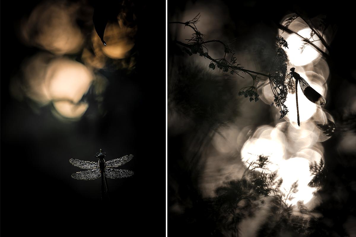 Petit mélange de photos... Ophrys15