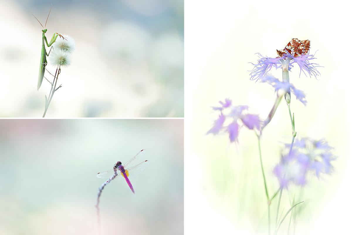 Petit mélange de photos... Ophrys17