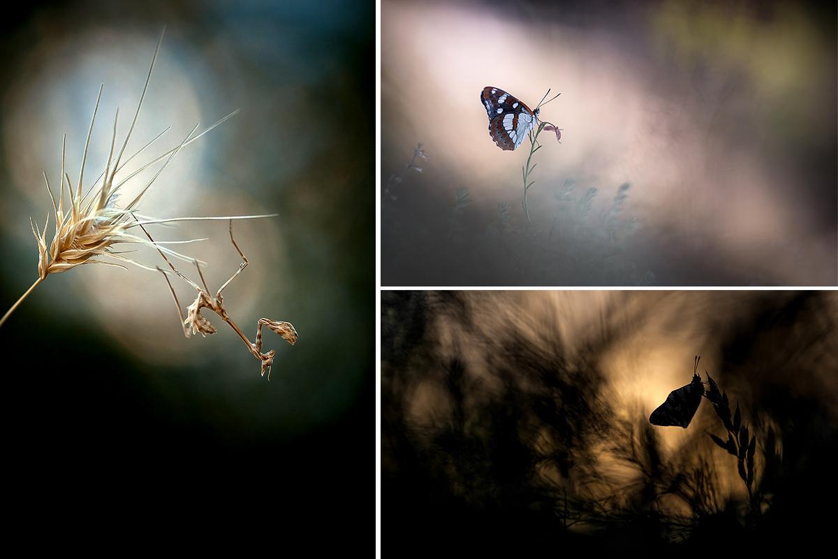 Petit mélange de photos... Ophrys18