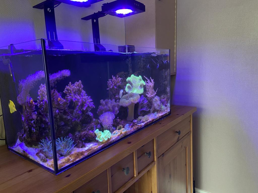 Le reef v. 2 sebbordeaux 9e61c710
