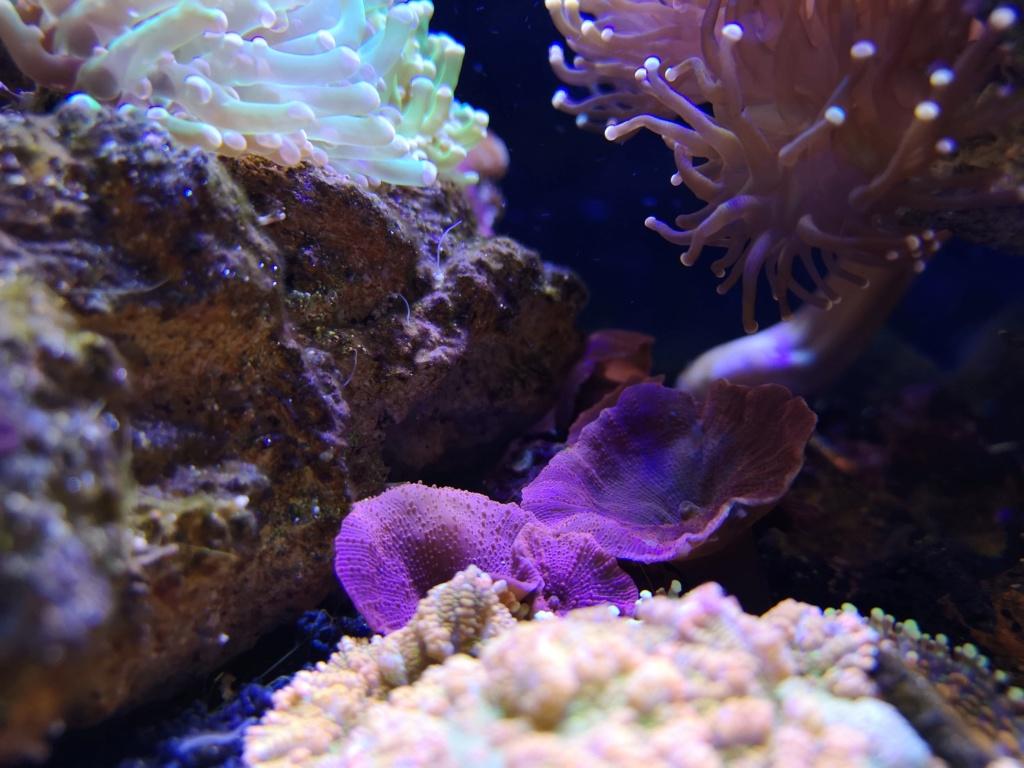 Le reef v. 2 sebbordeaux Img_2031