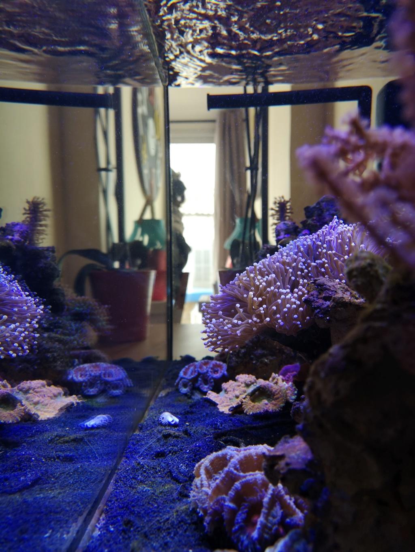 Le reef v. 2 sebbordeaux Img_2032