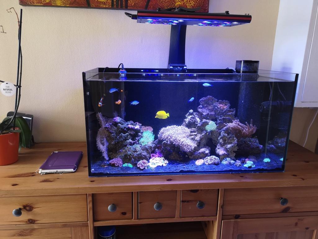 Le reef v. 2 sebbordeaux Img_2033
