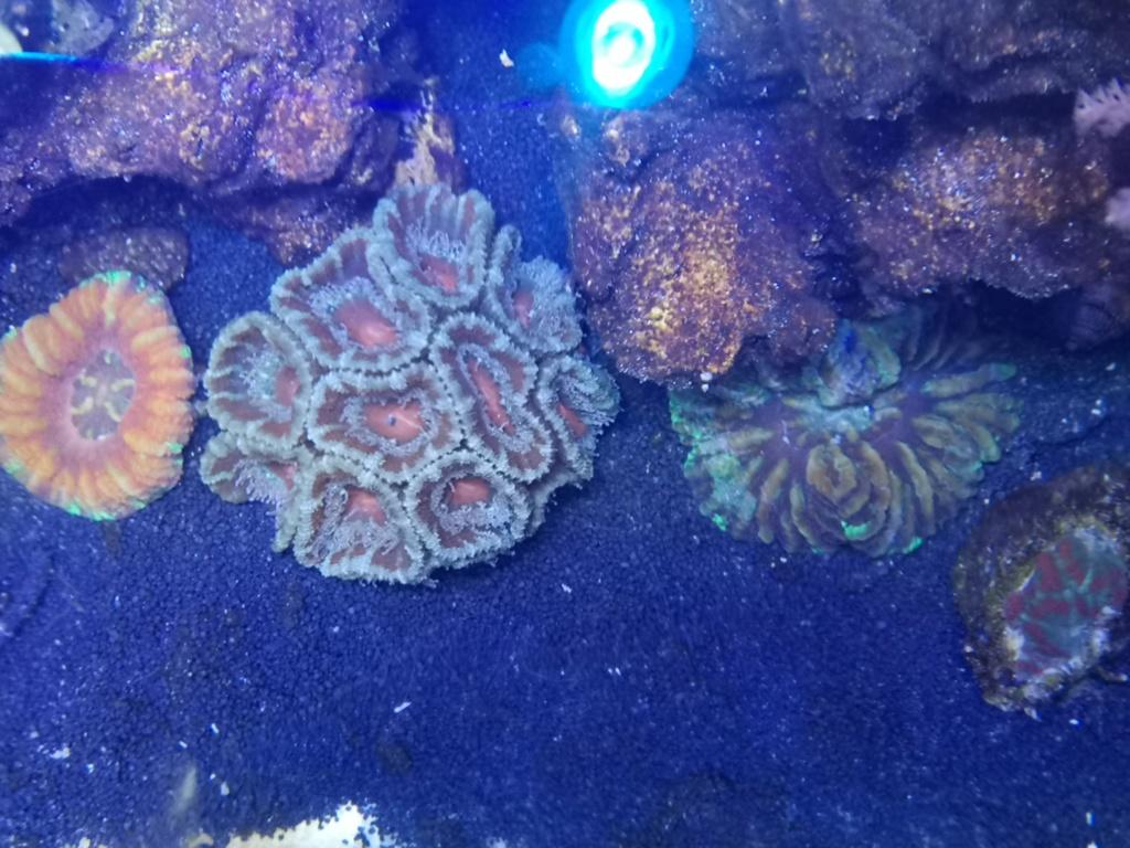 Le reef v. 2 sebbordeaux Img_2035