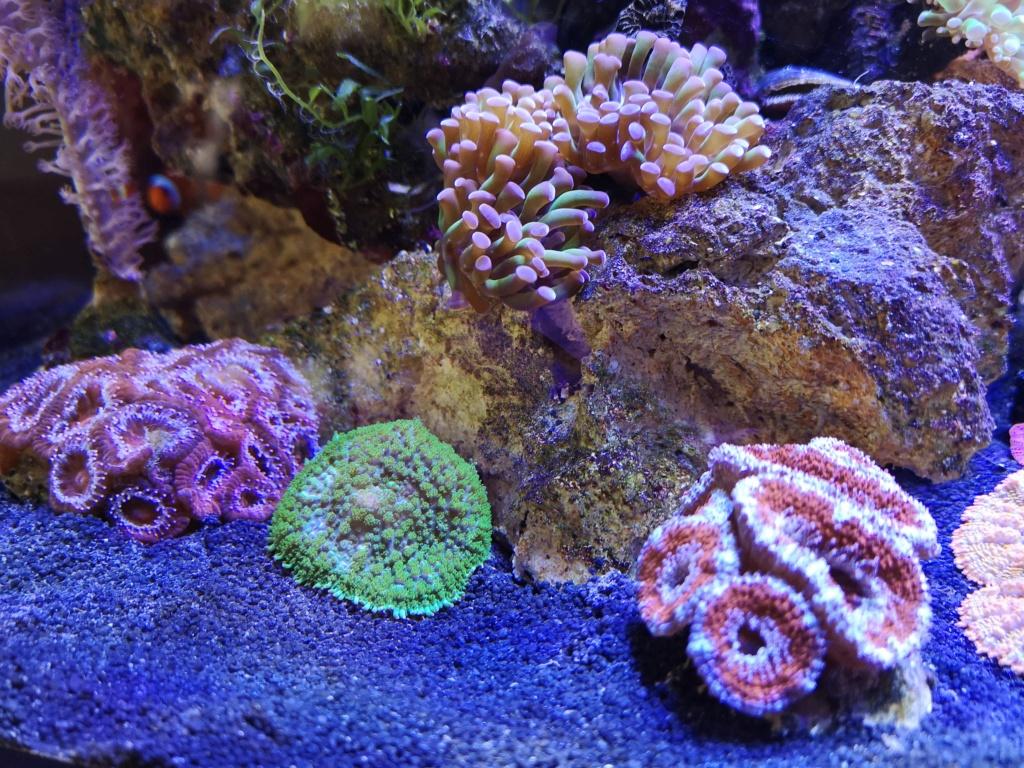 Le reef v. 2 sebbordeaux Img_2036