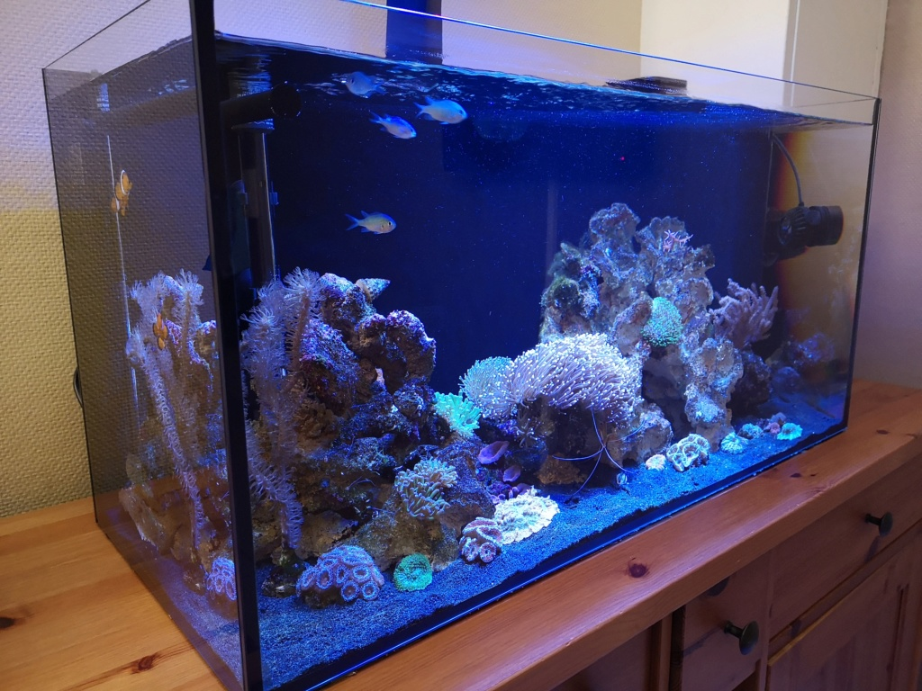 Le reef v. 2 sebbordeaux Img_2038