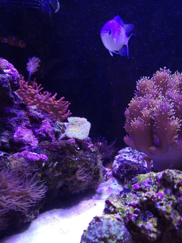 Le reef v. 2 sebbordeaux Img_2041