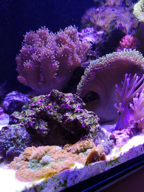 Le reef v. 2 sebbordeaux Img_2042