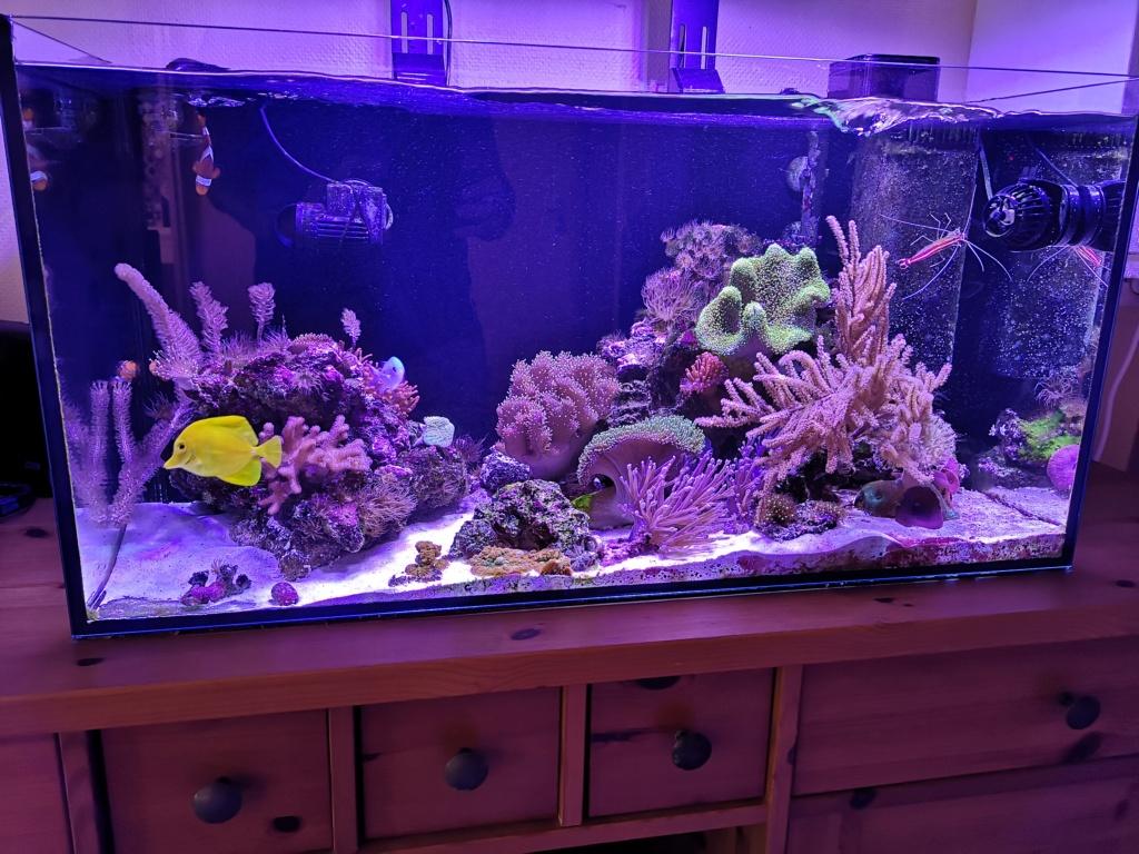 Le reef v. 2 sebbordeaux Img_2043