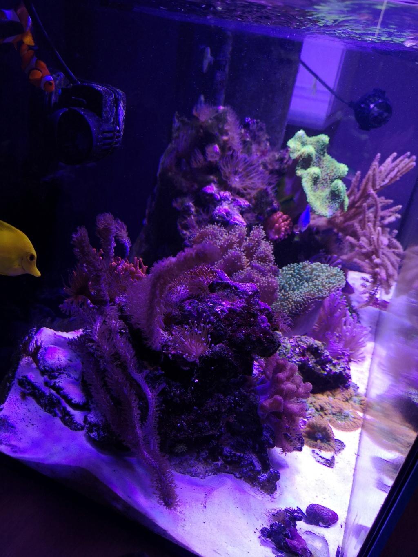 Le reef v. 2 sebbordeaux Img_2046
