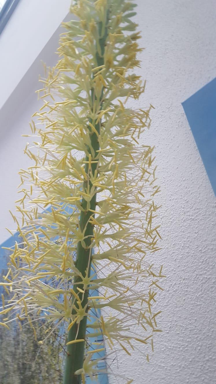 Kübelpflanzen - Seite 25 4fd11010