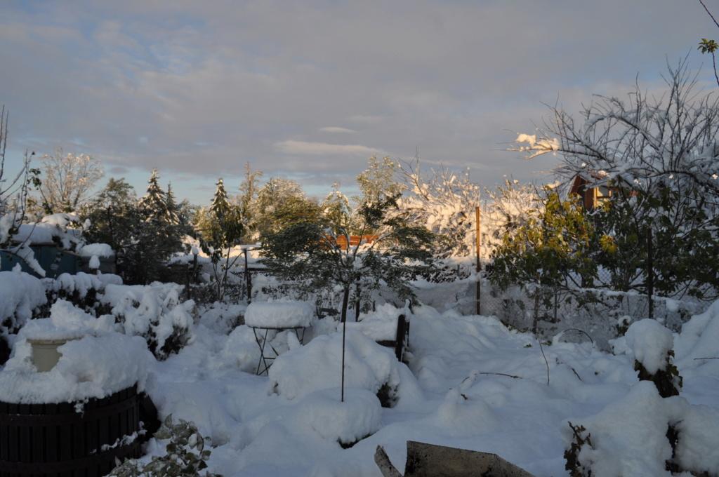 Tempête de neige Novemb24