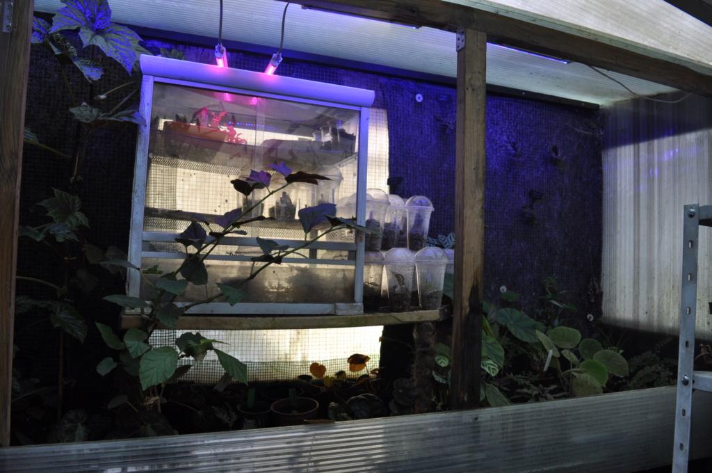 Le grand terrarium dans la serre Novemb35