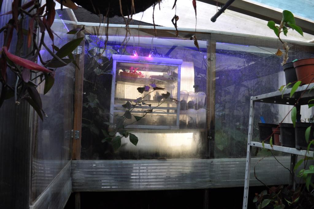 Le grand terrarium dans la serre Novemb36