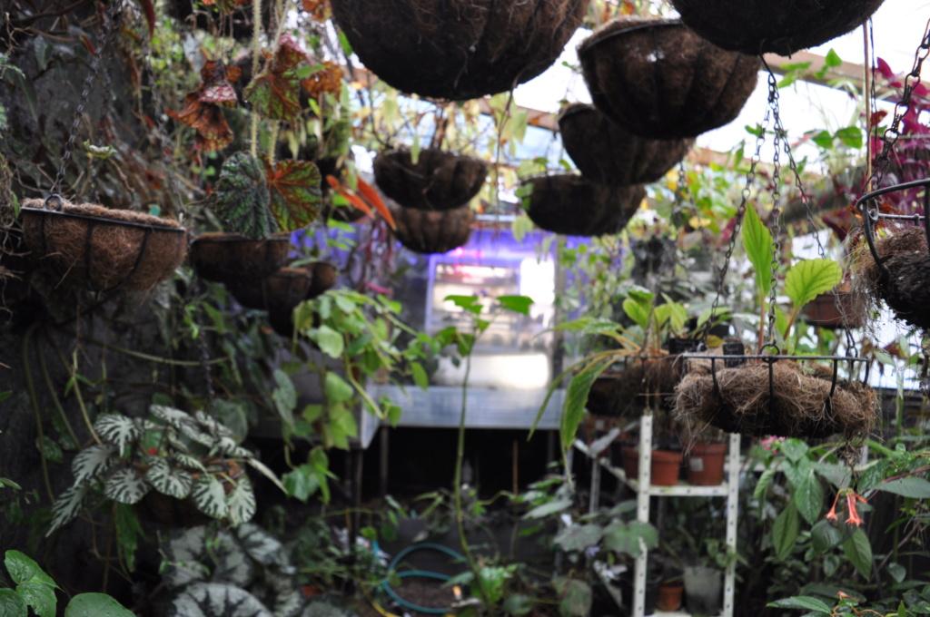 Le grand terrarium dans la serre Novemb37