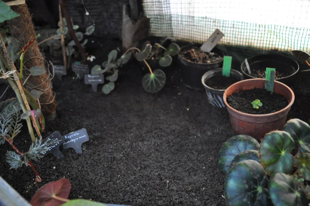 Le grand terrarium dans la serre Novemb41