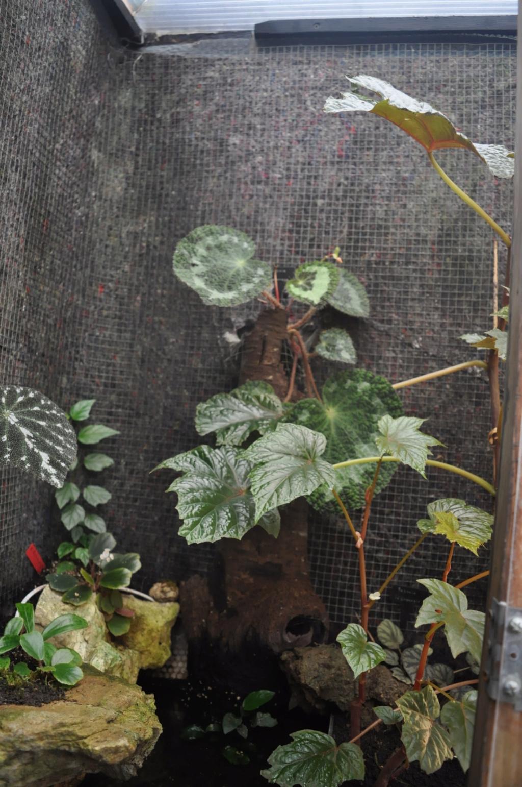 Le grand terrarium dans la serre Novemb47