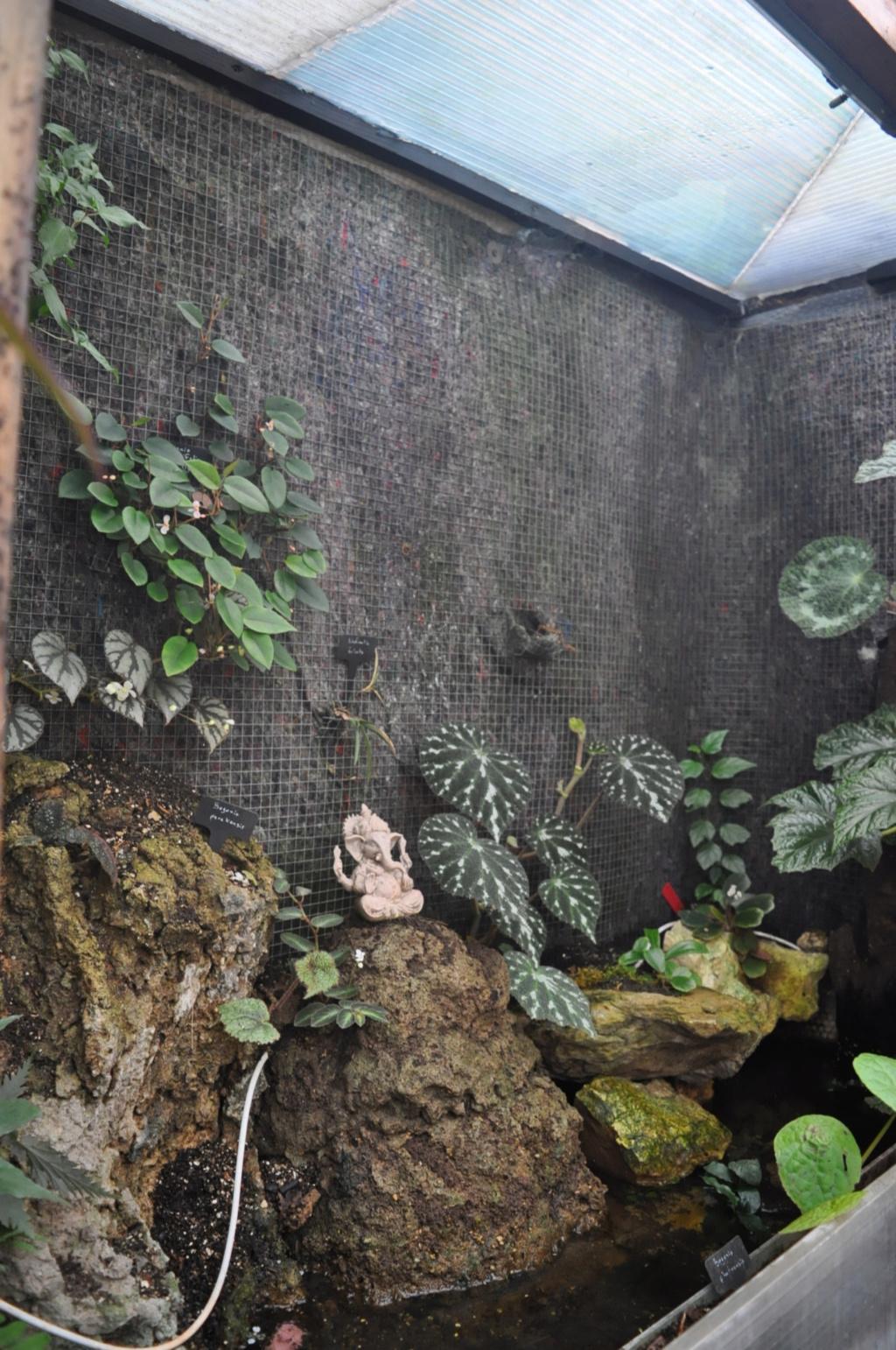 Le grand terrarium dans la serre Novemb48