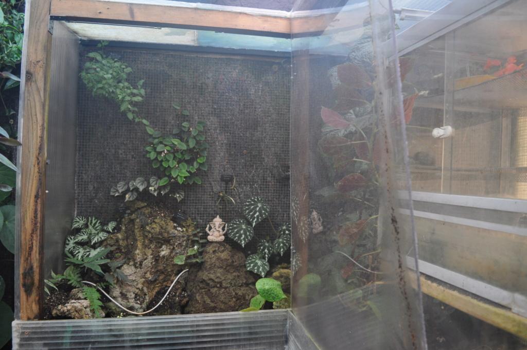 Le grand terrarium dans la serre Novemb49