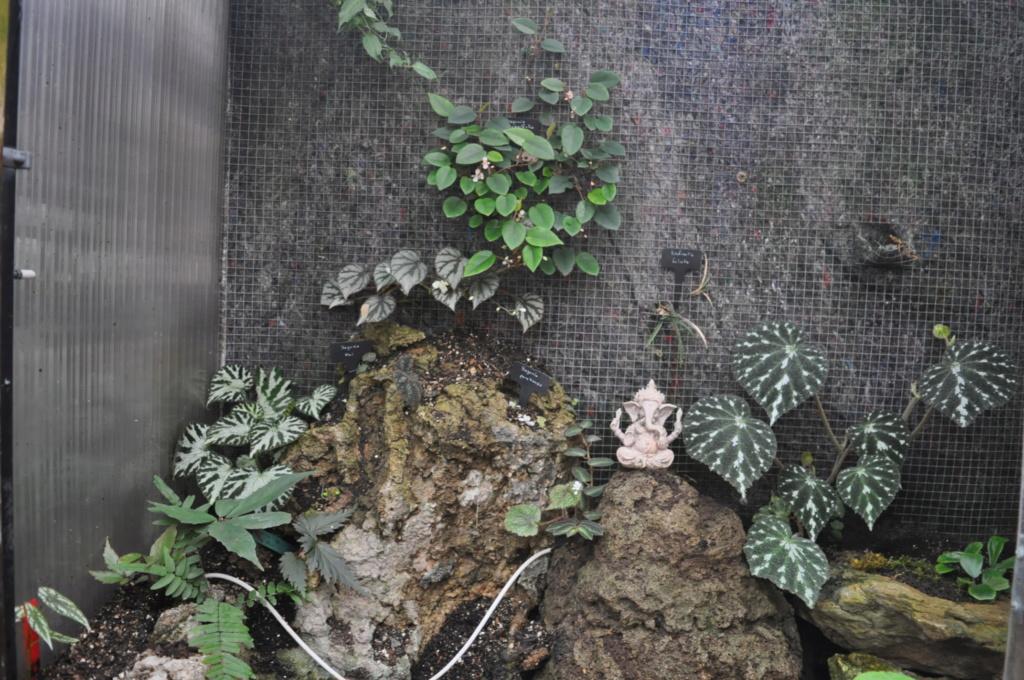 Le grand terrarium dans la serre Novemb51