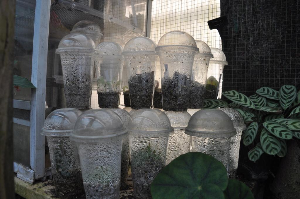 Le grand terrarium dans la serre Novemb52