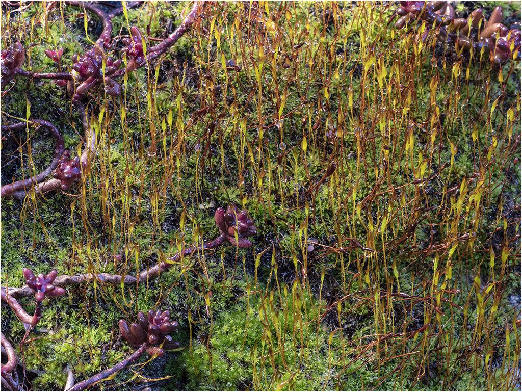 """"""" 23 cm2 de jardin """" essai post-focus _1280410"""