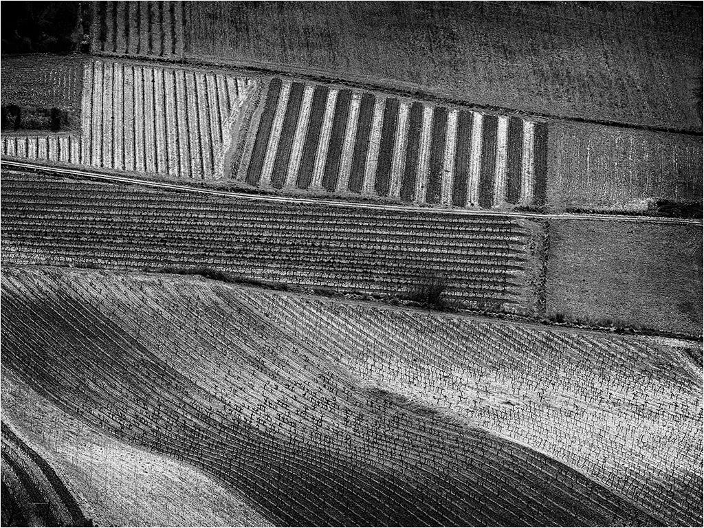 Vignes autour de Veaux (Vaucluse) _1370010
