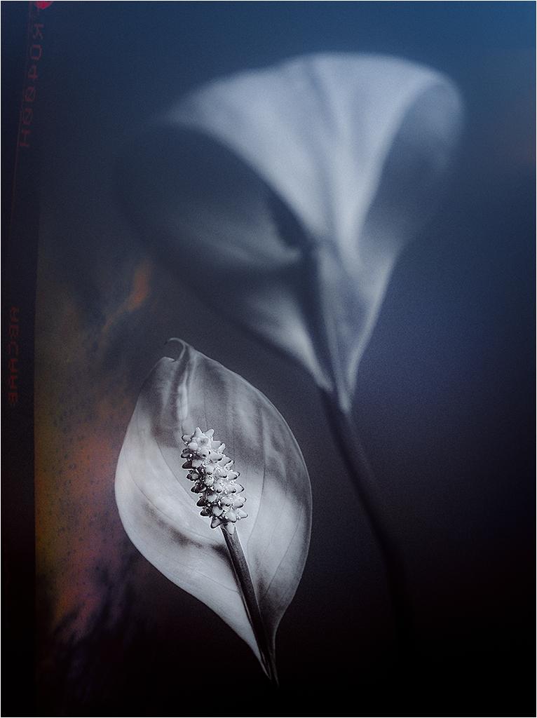 """"""" fleurs d'intérieur """" _1370714"""