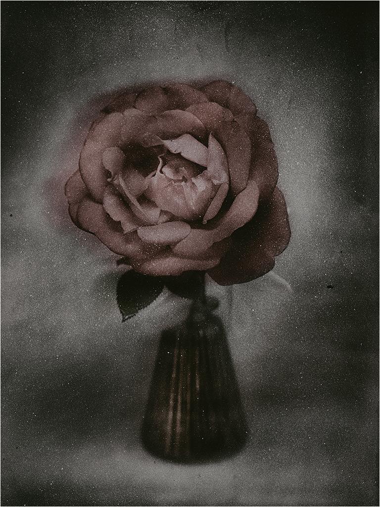 """"""" Dernière rose...."""" _1400810"""