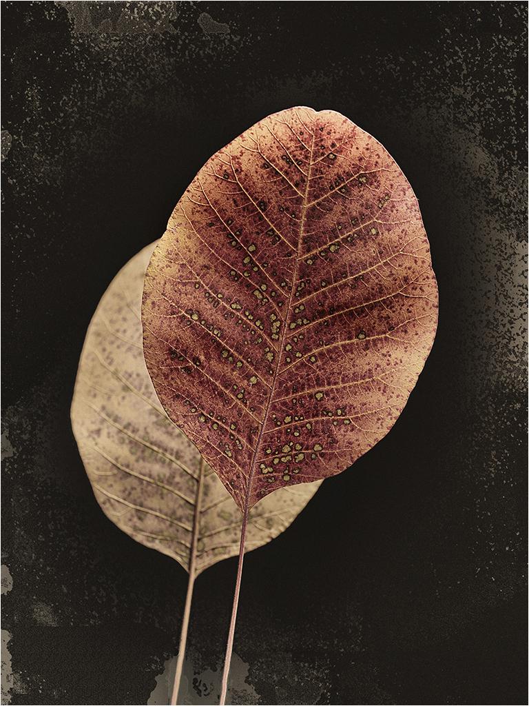 """"""" Les feuilles """" _1410310"""