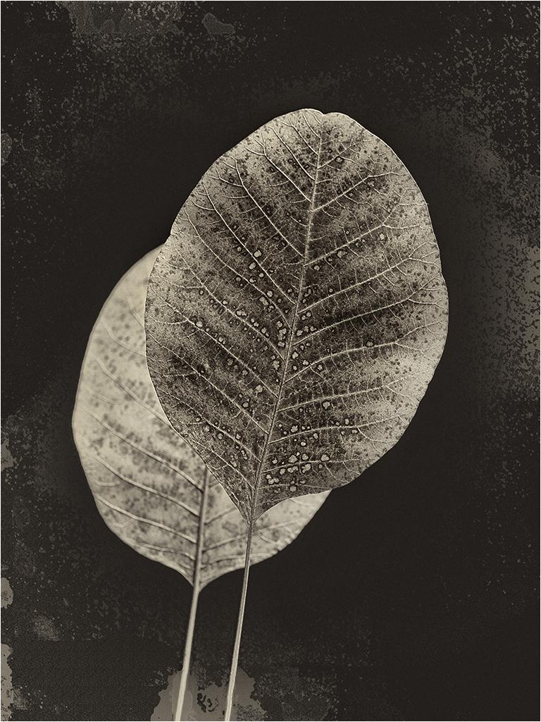 """"""" Les feuilles """" _1410311"""
