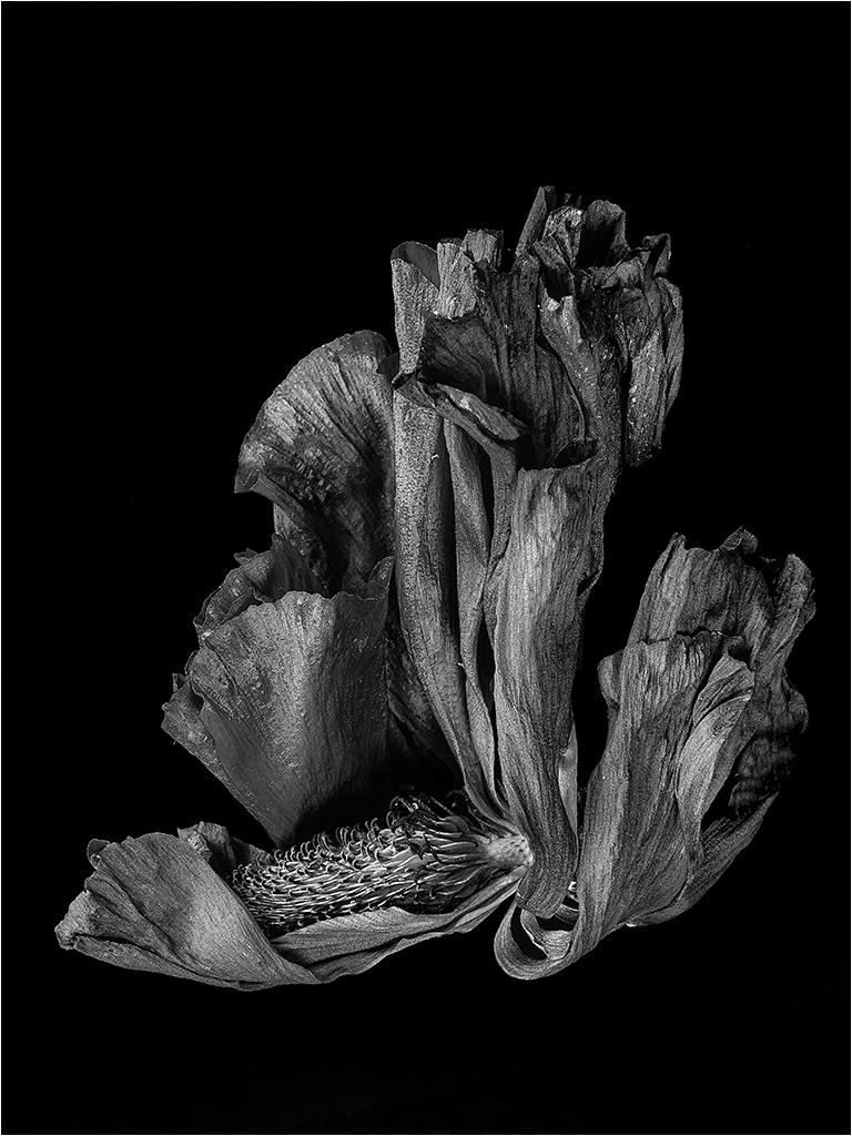 """"""" la fleur """" _1450310"""
